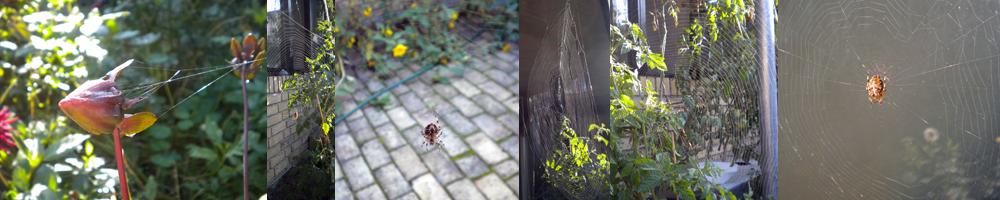 edderkoppespind i gårdhaven