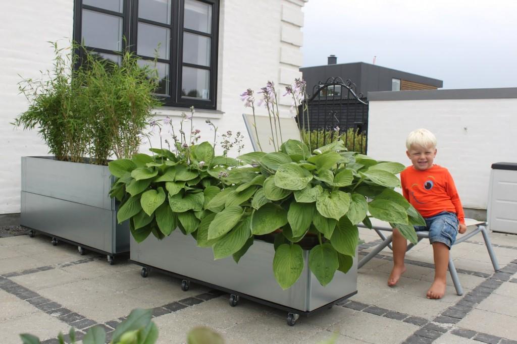 mobile højbede som rumopdeler på terrassen